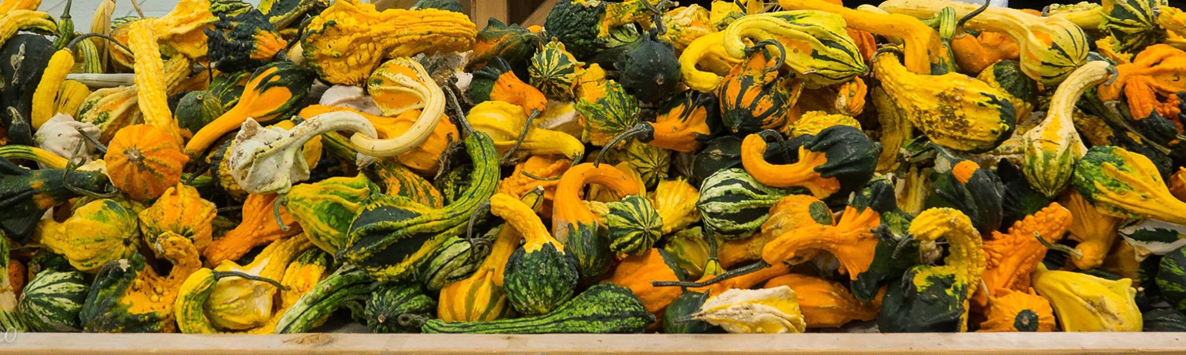 gourds-wide
